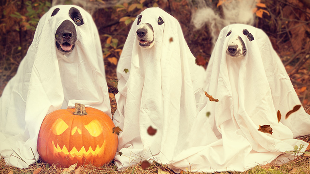 Nine Of The Best Doggy Halloween Costumes We've Ever Seen