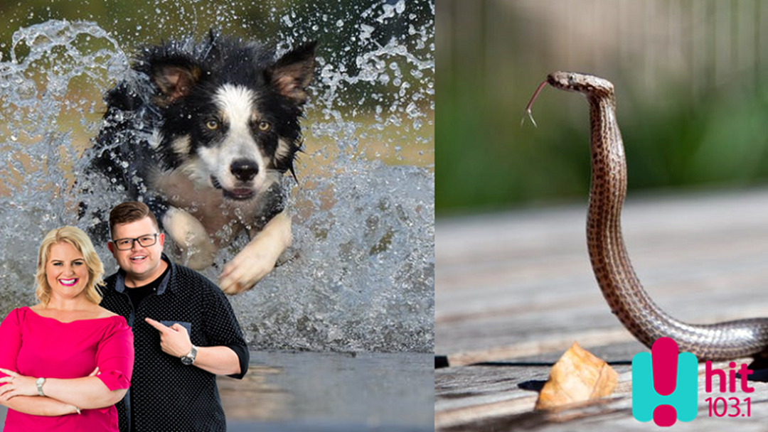 DOGS vs SNAKES- When Has Your Doggo Taken On A Snake?
