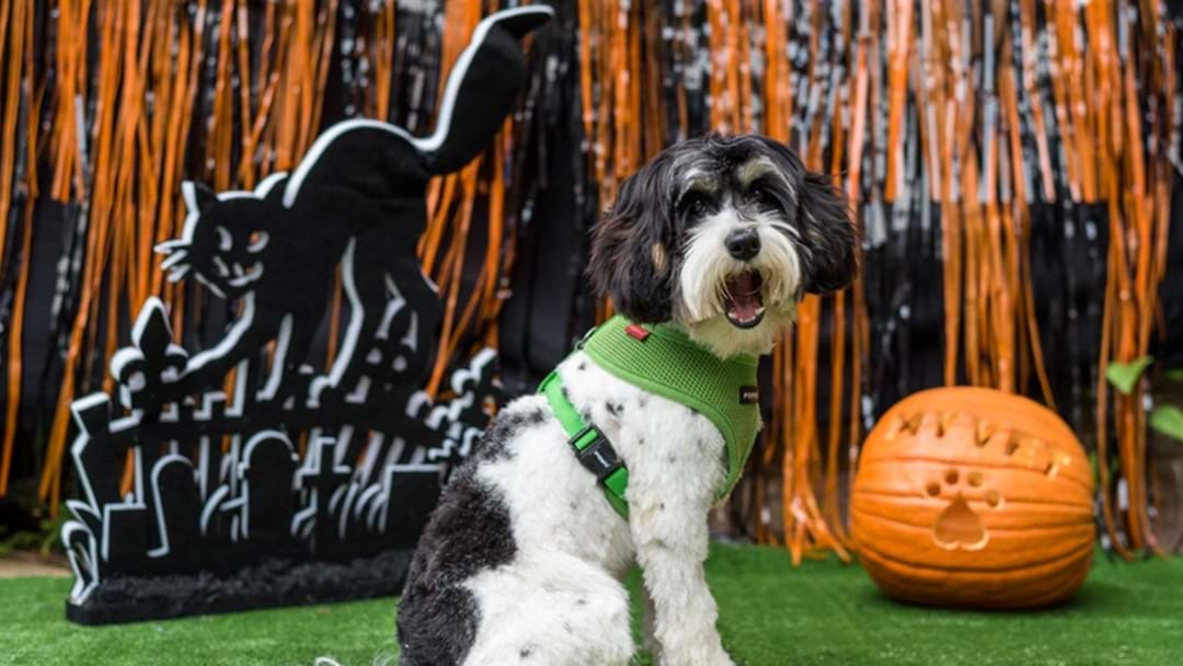 Don't Put Away Your Halloween Costume Yet Cos There's The ULTIMATE Spooky Pet Party This Weekend