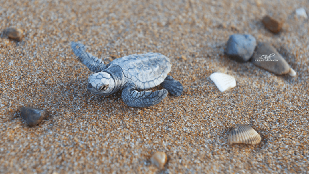 STOP EVERYTHING... Turtle Season Has Arrived!