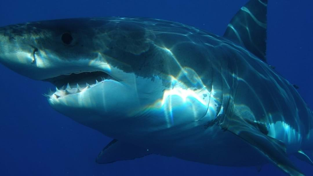 Surfer Drives Himself To Hospital After Shark Attack In Northern NSW