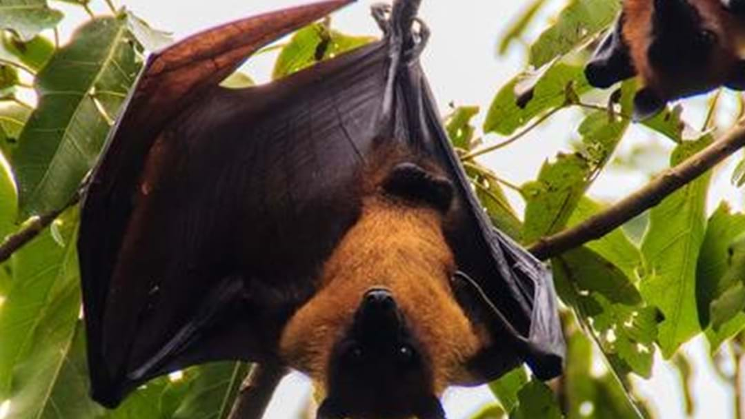 Are Bats Driving You Batty?