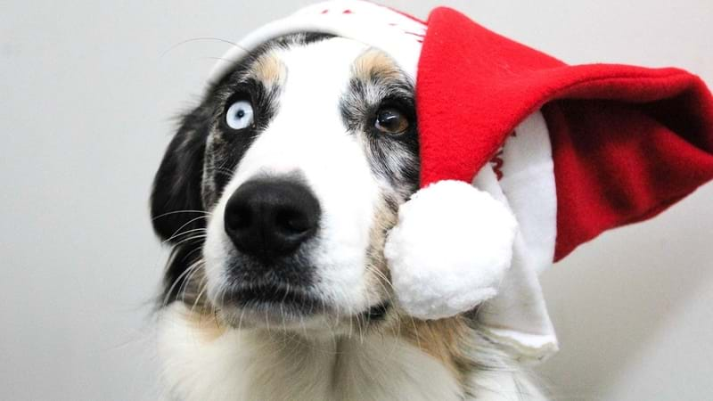 Article heading image for Your Fur Baby Deserves the Annual Santa Pic Too!
