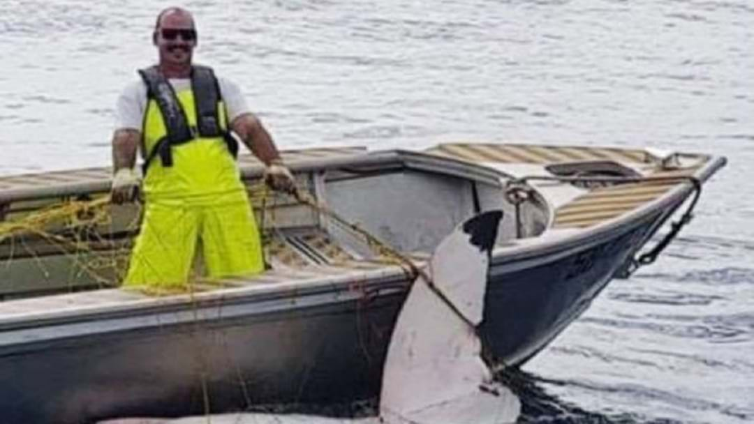 Massive 4.65 Metre Great White Shark Found Dead In Maroubra