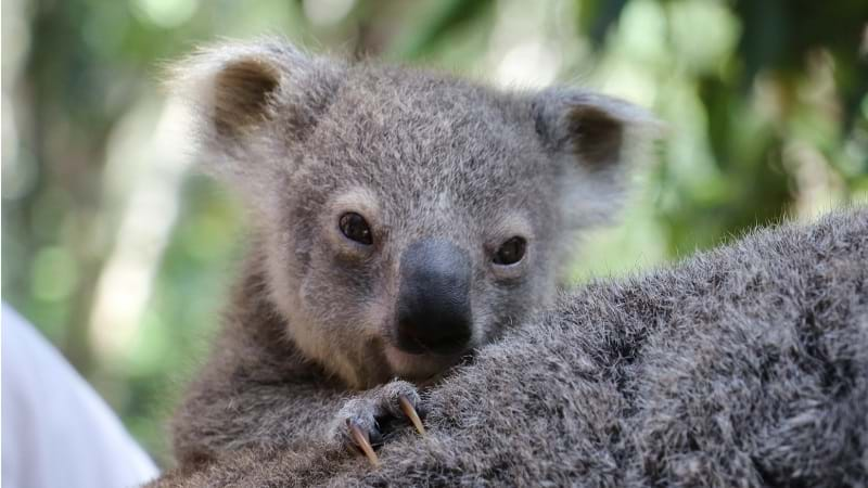 Article heading image for New Bundles Of Joy Arriving At Currumbin Wildlife Sanctuary