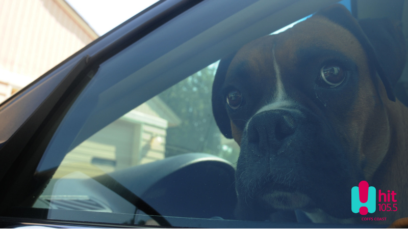 Article heading image for What To Do If You See A Child or Dog In A Hot Car