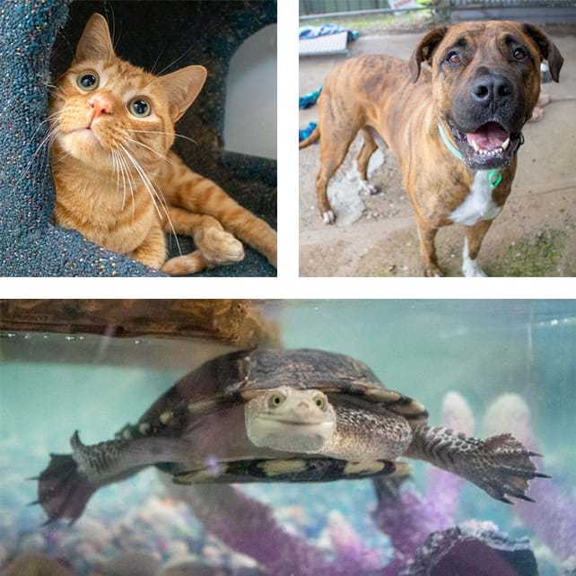 Henry the cat, Travis the dog, and Sweeney the turtle
