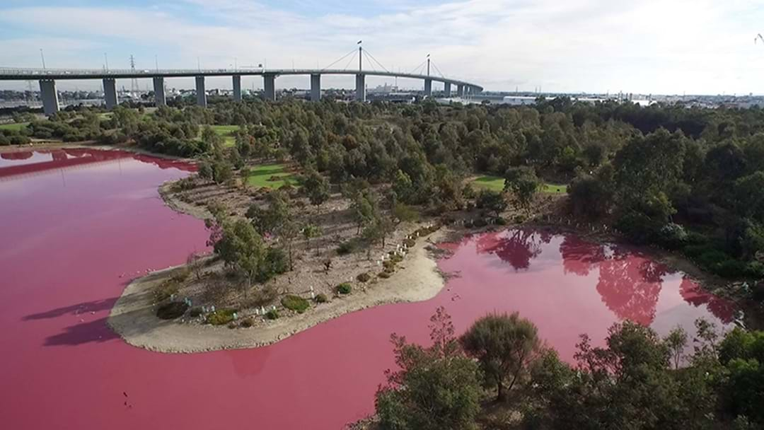 A Melbourne Lake Has Turned Pink